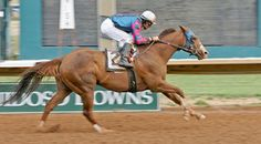 Safe Trip(TB)(2007)Tale Of The Cat(Tb)- Teruko(TB) By Coronado's Quest(TB). 4x4 To Northern Dancer, 4x5 To Raise A Native, 5x5 To Bold Ruler. Defeating QH In The 870 Yards Fine Loom H At Ruidoso Downs On May 24, 2014.