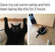 "20 Cat Memes To Remind You That Those Little Devils Are Always Up To No Good - Funny memes that ""GET IT"" and want you to too. Get the latest funniest memes and keep up what is going on in the meme-o-sphere. Best Cat Memes, Funny Animal Memes, Cute Funny Animals, Funny Animal Pictures, Funny Memes, Funny Pics, Hilarious, Animal Pics, Funny Cute Cats"