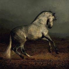 .Azteca horse Pura Raza Espanola Yeguada Herrera Caballos Espanoles Caballos Bailadores Andalusian Lusitano Lippizzaner spanish horse Piccador Vaquero Charro PRE