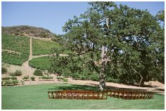 Triunfo Creek Vineyards in Agoura Hills, CA