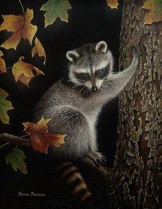 ACEO Art Print Raccoon Animal Autumn Limited Edition Print by Karen Romine Fluffy Animals, Animals And Pets, Cute Animals, Wild Animals, Cute Animal Memes, Funny Animal Pictures, Wild Life, Raccoon Art, Raccoon Animal