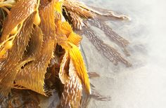 Did you know that no other plant on the planet contains as much vitamins or minerals as seaweed. Not surprising really since life began at sea.
