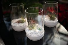 Order online and have it delivered!    What a gem! This tillandsia terrarium is a treasure for your home or as a gift. A beautiful faux gem, white stones and a green tillandsia air plant. The terrarium has a white ceramic base. Water your plant by removing it from the terrarium, submerging it in water for 5-10 minutes per week, and then allowing it to dry before replacing it in the glass case.  www.westcoastgardens.ca  #surreybc #southsurrey #vancouverbc
