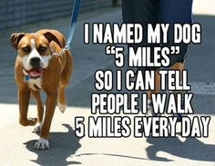 5 miles funny quotes quote dog lol funny quote funny quotes humor @Lauren Davison Natale