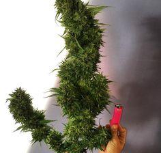 Cannabis Training U (