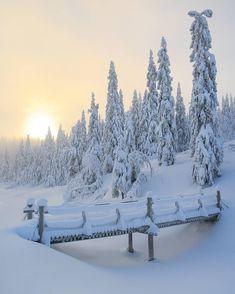 Winter wonderland photo by - learning from nature Winter Szenen, Winter Love, Winter Magic, Norway Winter, Snow Pictures, Nature Pictures, Winter Photography, Nature Photography, Foto Picture