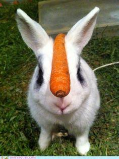 cute animals - Bunday: Perfect Balance