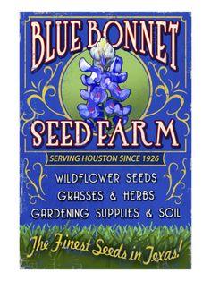 Texas Blue Bonnet Farm Print by Lantern Press at Art.com