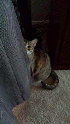 Great hiding spot ;) - http://ift.tt/1HQJd81