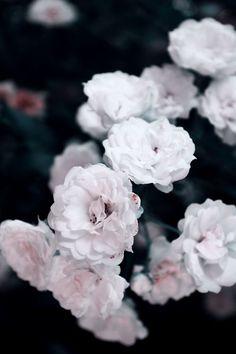 ♡ #FlowerShop #Anthropologie