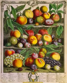 Fruits of the Season - Autumn by Robert Furber - art print from King & McGaw