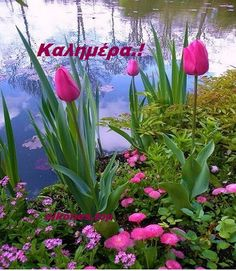 Pretty Tulips & Other Flowers by the side of a lake… – mi sitio Good Morning Greetings, All Nature, Beautiful Places In The World, Garden Gates, Gardening For Beginners, Monet, Botanical Gardens, Mother Nature, Planting Flowers
