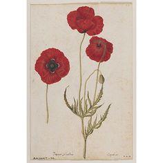 Watercolour | Le Moyne de Morgues, Jacques | V Search the Collections