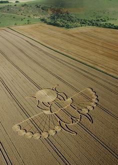 Crop Circle Insect design