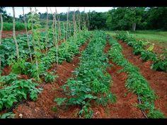 La Tierra Prometida - www.agroecologiapr.org - YouTube