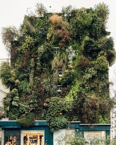 """Oasis of Aboukir"" in Paris, France, a green wall masterpiece by vertical gardener Patrick Blanc."
