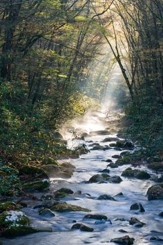 River in the Great Smoky Mountains National Park                                                                                                                                                      More