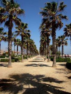 valencia, spain. loved it there- beautiful beaches