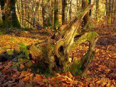 El invierno simula silencios y se envuelve en el falso disfraz de la quietud. Aparenta pasividad, inacción, indecisión, pero finge. El paseante distraído pasea paseando su paseo, y se deja embaucar por los sigilos. La tregua es solo un disimulo en las mudas soledades de tu bosque
