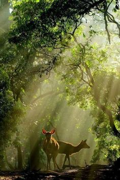 Earthly Enchantment