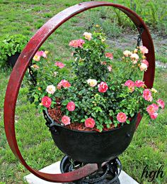 This is a project outside.  The farm wagon wheel rim is from Missouri and over 100 yrs. old.  I planted a multi colored rose bush in the farm boiling cauldron which is also over 100 yrs. old
