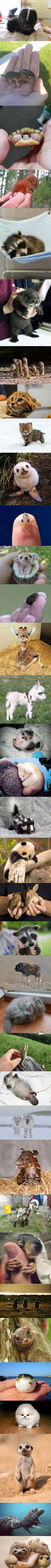 Cute baby animals collection! Baby platypus with it's little pink belly! And baby hippos and otters! Cut overload!