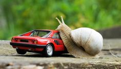 Mr Snail Climbs the Ferrari by Johan Grinbergs. Most adorable thing ever or what? XD