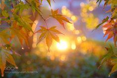 22870660756.jpg by y-fu. Please Like http://fb.me/go4photos and Follow @go4fotos Thank You. :-)