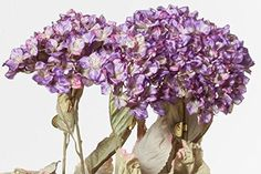 Hybrid Hydrangea, Crinkled, Purple, 32 Inches High, 12 Floral Sprays >>> Read more reviews of the product by visiting the link on the image.