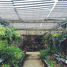 The long view at the Styer's nursery, caught by @ruthieoo. Link in profile to see more of our favorites from the #terraindigs feed.