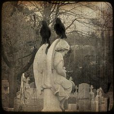 Google Image Result for http://images.fineartamerica.com/images-medium/the-crows-view-gothic-and-crows-art-photography.jpg