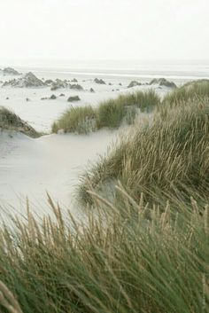 This reminds me of the New England coast (East Coast) and how beautiful and different it is from the West Coast. <3