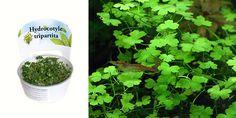 Аквариумные растения Акварюмка