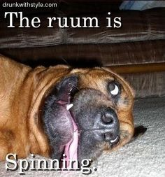 Room Is Spinning Funny Drunk Dog Rum