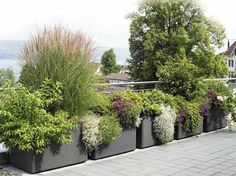 Garden pots and beautiful plants in the garden – new – Garden Care Garden Types, Jardim Natural, Cement Flower Pots, Pot Jardin, Front Yard Design, Rooftop Garden, Natural Garden, Garden Planters, Balcony Gardening