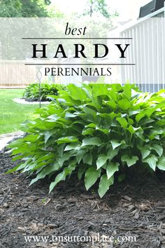 Best Hardy Perennials for your garden-- good info to know! via On Sutton Place