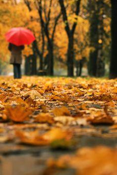 Photo: A rainy autumn day