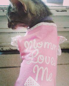 #cat #cats #cute #pets #beautiful #gato #pink #dress #mascota #gathijo #mommy by lucero_a7x