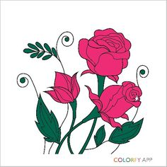 Pink Roses #colorfy