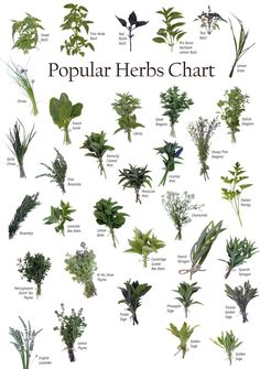 Identifying Herbs | Powers of natural Herbs | Health and Fitness Society