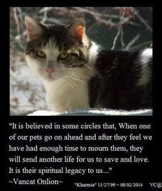 It is believed in some circles that, when one of our pets go on ahead and after they feel we have had enough time to mourn them, they will send another life for us to save and love. It is their spiritual legacy to us. Cat Quotes, Animal Quotes, Life Quotes, Crazy Cat Lady, Crazy Cats, Animals And Pets, Cute Animals, Funny Animals, Pet Loss Grief