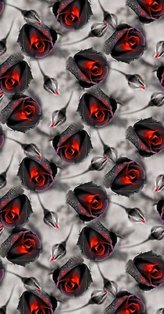 Red Wallpaper, Butterfly Wallpaper, Mobile Wallpaper, Red Rose Pictures, Colorful Pictures, Beautiful Red Roses, Pretty Wallpapers, Cellphone Wallpaper, Flower Wall