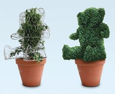 LARGE TEDDY BEAR TOPIARY FORM - Just close these wire forms around a boxwood plant-and start snipping! These delightful animal topiaries were designed in Belgium by one of the biggest boxwood growers in Europe. The 3-D forms are hinged, so you can install them over an established plant. Then you clip and trim the shoots as they grow through the mesh, until the wire is completely hidden by the green animal shape.