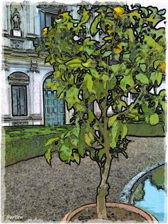 """... nel """"giardino segreto""""  che mantiene intatto il disegno risalente al '700, quando fu ridisegnato secondo il gusto francese."""