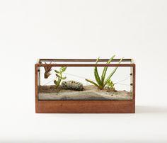 MINI I - Walnut Terrarium with Glass