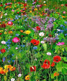 Wild Flower Meadow, Meadow Flowers, Wild Flowers, Wild Flower Gardens, Fresh Flowers, Beautiful Flowers Garden, Pretty Flowers, Beautiful Gardens, Exotic Flowers