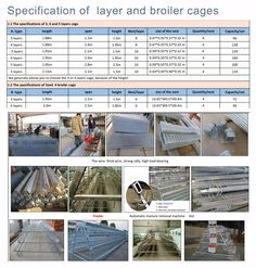 Want to buy quality layer cage for egg laying chickens? We offer the best layer cages and free layout design to help you build your own poultry business. Poultry Business, Poultry Cage, Poultry Equipment, Layer Chicken, Chicken Cages, Beautiful Chickens, Layout Design, Nest, Royalty