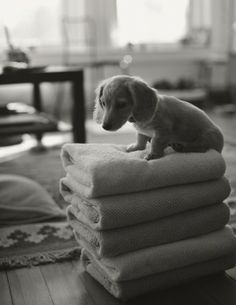 My heart just melted! I have an unhealthy love for daschunds..