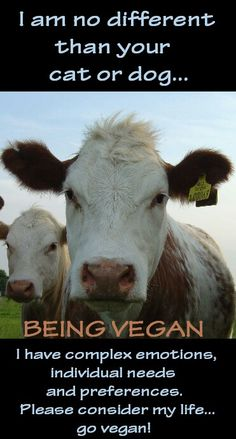 Cows are no different than your cat or dog. They have complex emotions, individual needs, and preferences. Go vegan.