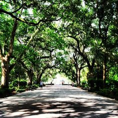 Savannah is the ultimate in gentility Dog Stroller, Forsyth Park, East Coast Road Trip, Beautiful Park, Strollers, Farmers Market, Concerts, Volleyball, Savannah Chat